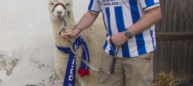 Gabi – The Alpaca who supports Brighton!