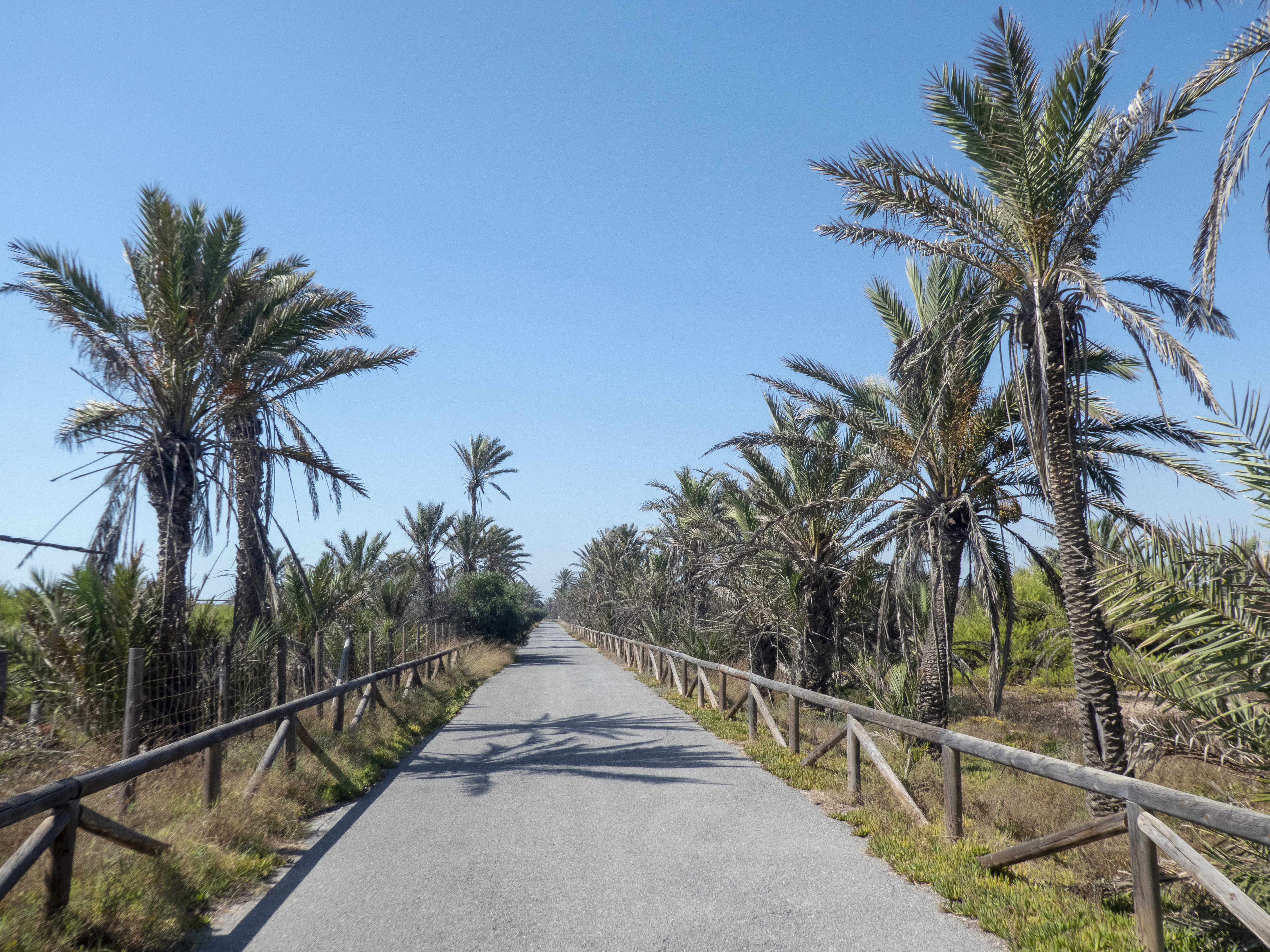 Five Easy Walks in the Vega Baja